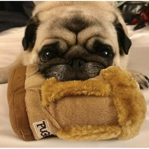 LUXE COLLECTION | PUGGS Boot